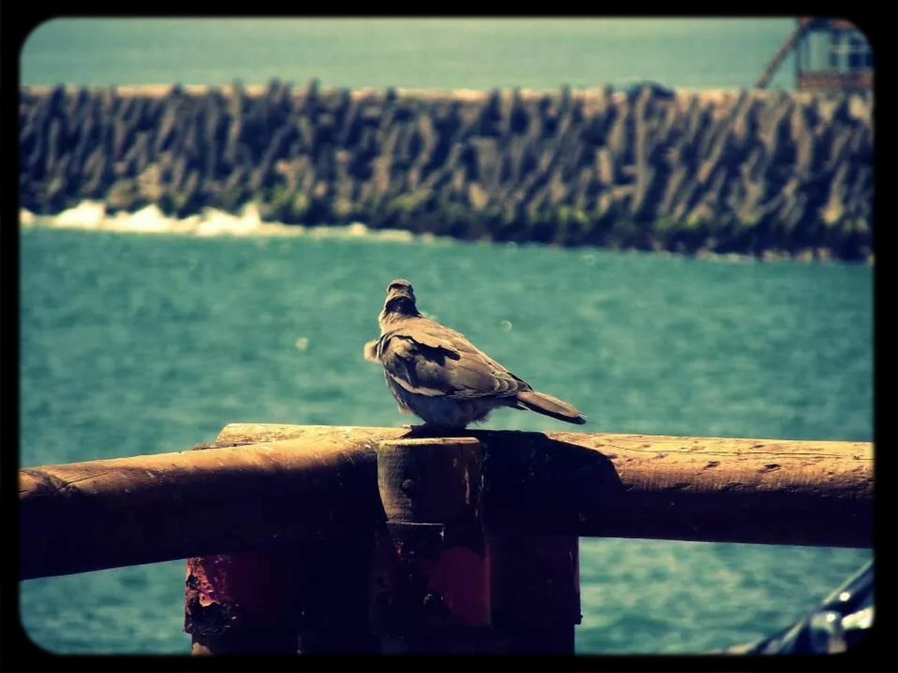 Aves Relaxing Arica -chilean Traveling