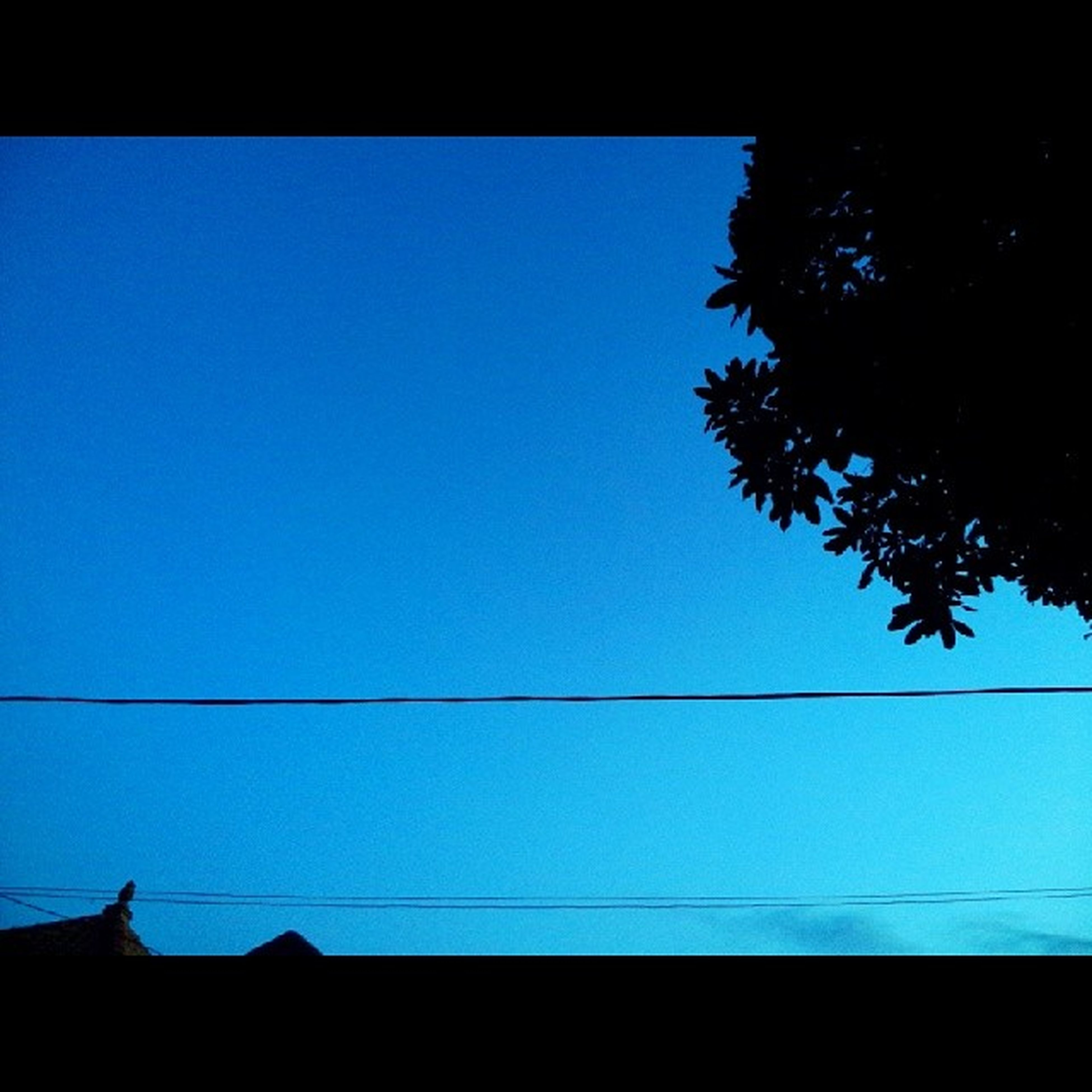 clear sky, low angle view, blue, copy space, tree, silhouette, power line, high section, built structure, sky, architecture, house, nature, roof, branch, building exterior, no people, outdoors, day, beauty in nature