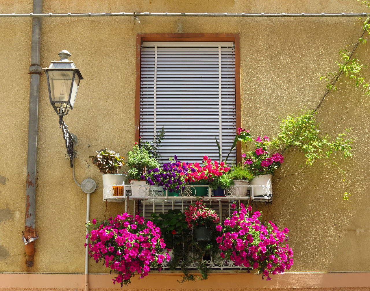 Architecture Architecture Balcony Balcony Garden Balcony Life Balcony Shot Balcony View Balkon Balkonien Building Exterior Built Structure Flower Boxes Italian Architecture Italien Italy Planter Sardinia Sardinia Sardegna Italy  The Architect - 2017 EyeEm Awards Urban Garden Urban Jungle Window Window Box Window Boxes Windows