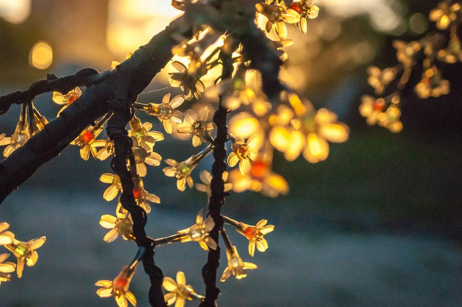 Beautiful stock photos of fairy, Branch, Celebration, Close-Up, Decoration
