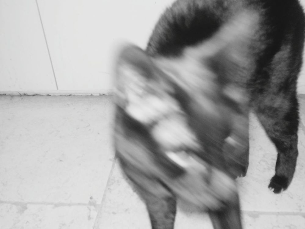 Black Cat Eeyem_cat Blackandwhite