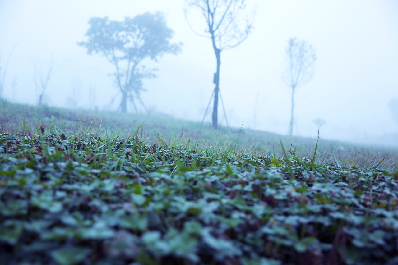 Beauty In Nature Close-up Day Feel The Fog Field Grass Growth I Am A Photographer Landscape Nature No People No Tag Outdoors Sky Tranquility Tree Wonderland_arts