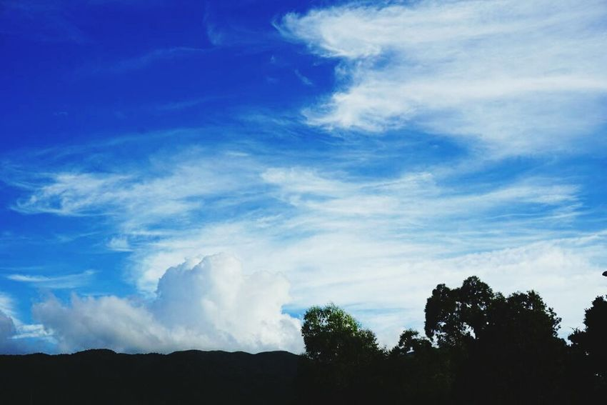 Tree Cloud - Sky Blue Sky Nature Forest Beauty In Nature Forest Fire - TaiPo Lin Vilage Hong Kong
