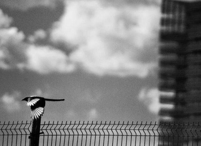 EyeEm Best Shots - Nature Blackandwhite Blancoynegro Eye4black&white  Blackandwhite Photography Bnw_collection EyeEm Bnw Bnw Bird In The City