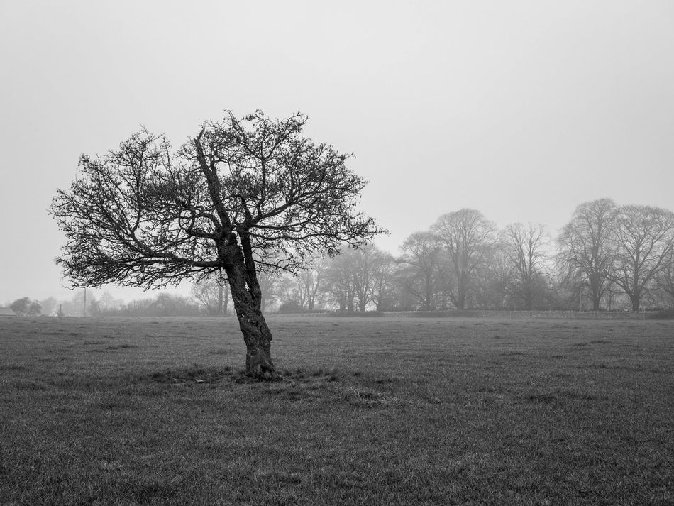 Bare Tree Beauty In Nature Black And White Branch Clear Sky Day Grass Idyllic Landscape Lone Mist Misty Misty Morning Nature No People Outdoors Scenics Single Tree Sky Tranquil Scene Tranquility Tree