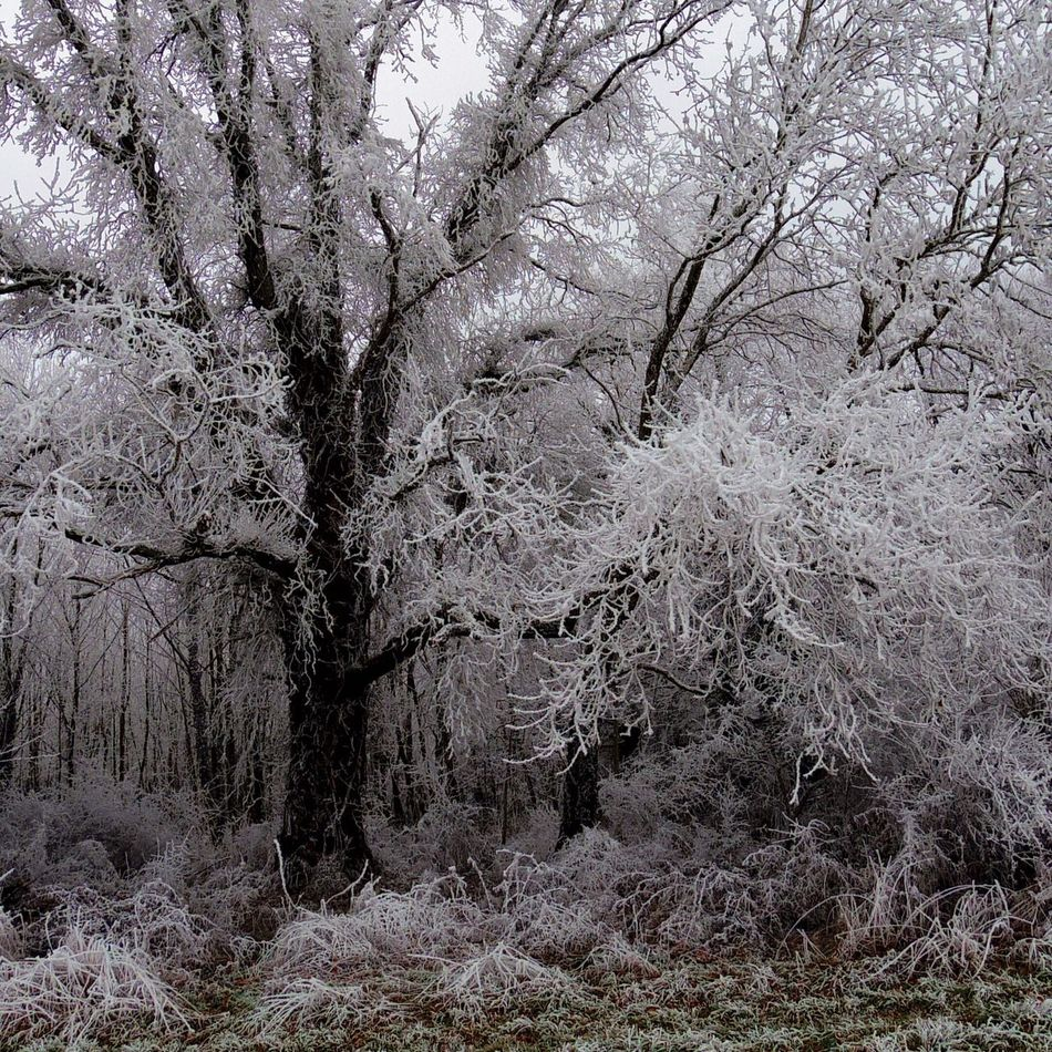 Tree Nature Branch Cold Temperature Winter Growth Snow Beauty In Nature No People Outdoors Bare Tree Day Landscape Scenics Sky Close-up