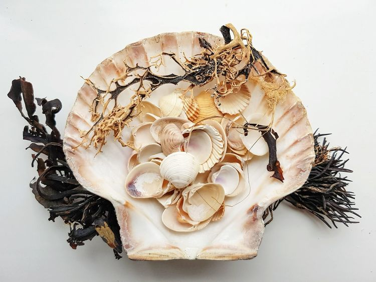 Large shell with a selection of smaller shells & seaweed. Studio Shot No People White Background Close-up Nature Photography Nature_perfection EyeEmNewHere Samsung Galaxy S7 Edge Nature_collection Beach Life Shell Collection Beach Day Natural Beauty Souvenirs Holiday Memories Seaside Artistic Seashell Seashell Collection Shell Photography Beachlife Shells Natural Beauty! Shell Art Naturelovers