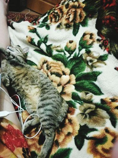Hi! Hello World Relaxing Beautiful Cat Cats Cats 🐱 Catslife Cats Lovers  Catsleep