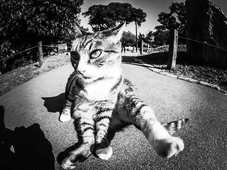 Animal Themes One Animal Domestic Cat Day Mammal Outdoors Feline Pets Domestic Animals Shadow Sunlight No People Tree Cat Cats Fisheye Blackandwhite Cat♡ Cats Of EyeEm Cat Lovers Miaou
