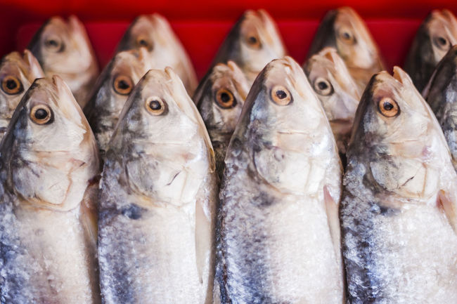 Animals Close-up Dead Fısh Fish Market Food For Sale Marine Life Raw Repetition Retail  Salted Fish Seafood Still Life Water Creatures Wet Market