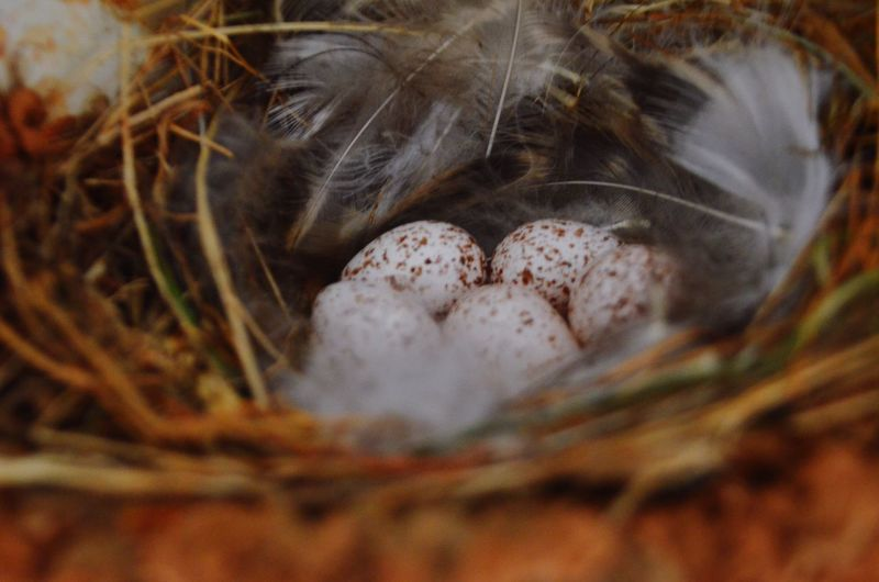 Eggs Renewal  Nest Spring New Waiting