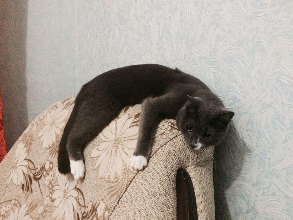 кот котэ Коты Котик котэйка котики Фибоначчи мой кот мой котэ)