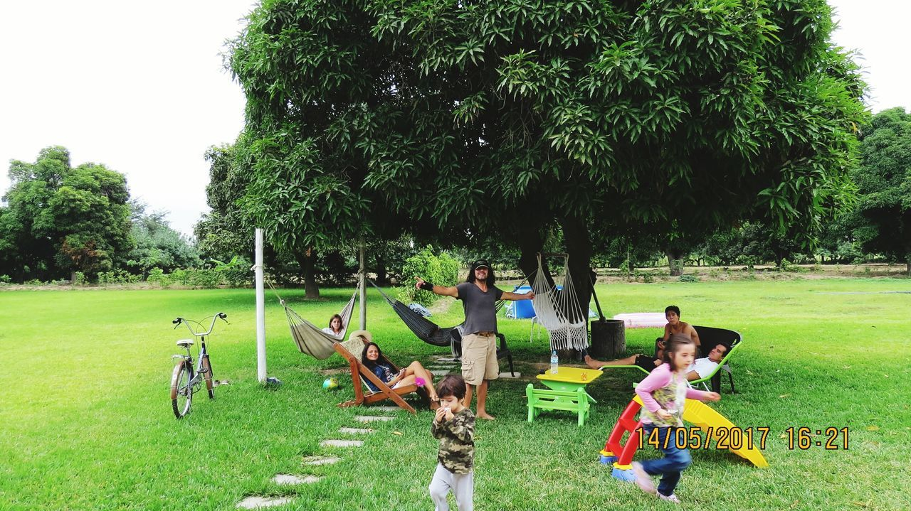 tree, grass, growth, real people, field, green color, nature, day, outdoors, park - man made space, togetherness, leisure activity, playing, friendship, mammal, beauty in nature, animal themes, sky, young adult