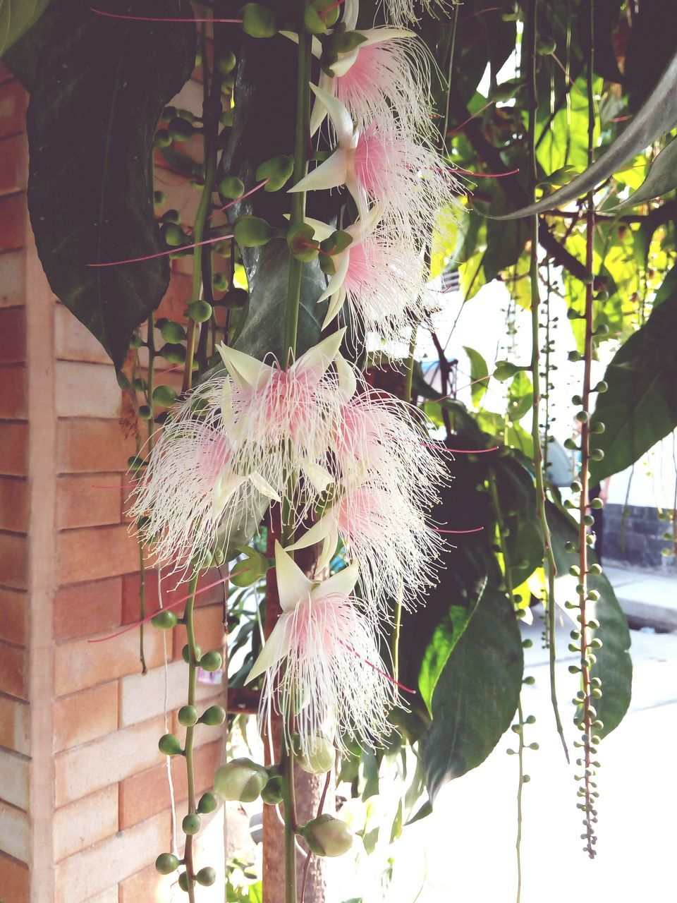 hanging, no people, plant, nature, outdoors, day, focus on foreground, growth, beauty in nature, close-up, leaf, fragility, flower, tree