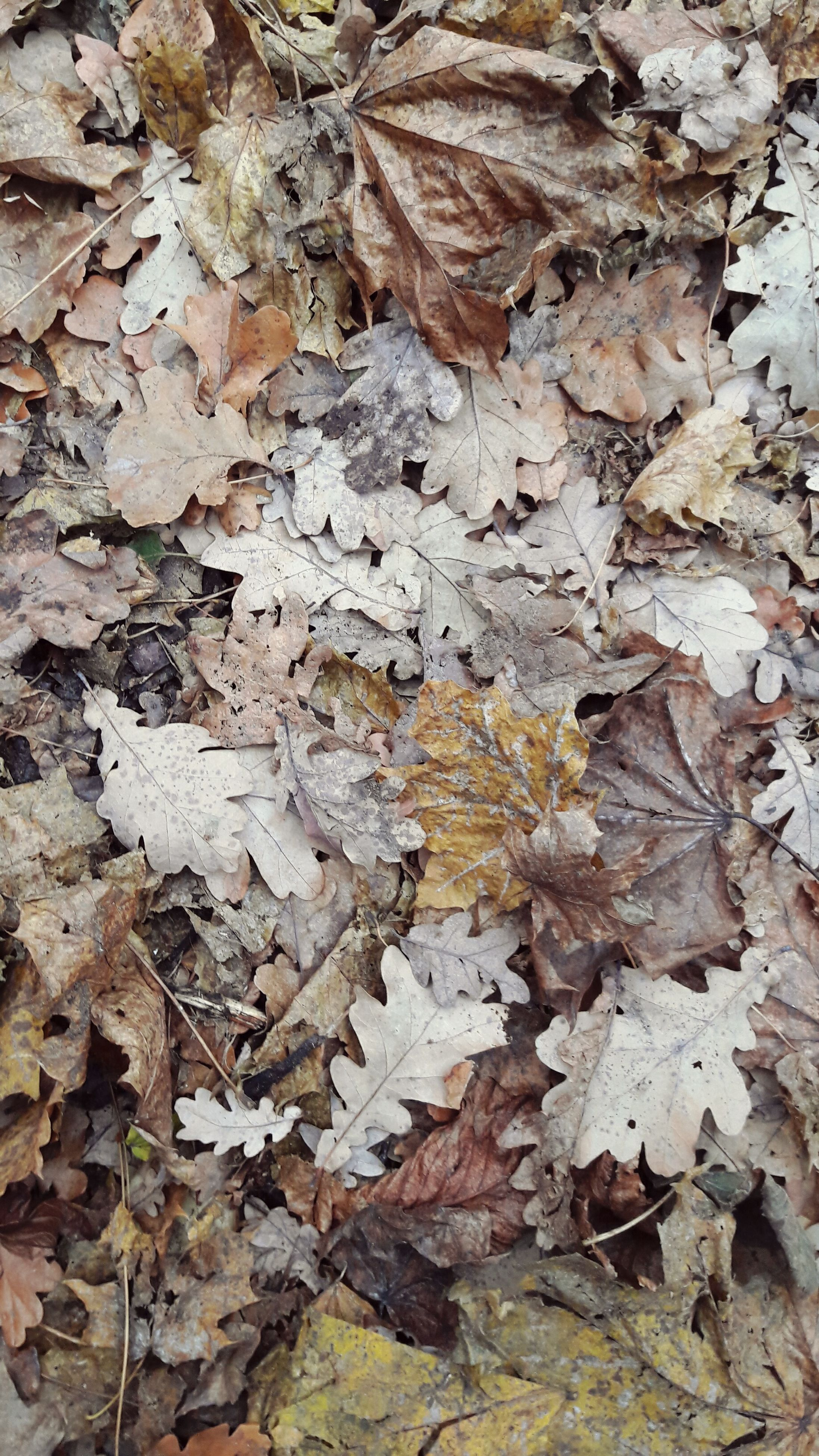 leaf, backgrounds, nature, full frame, close-up, no people, outdoors, autumn, day, fragility