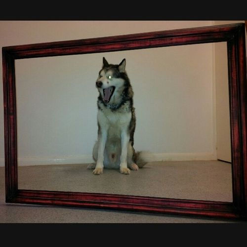 Framed dog in shock Dogs Cute Pets Humour Shocked Face
