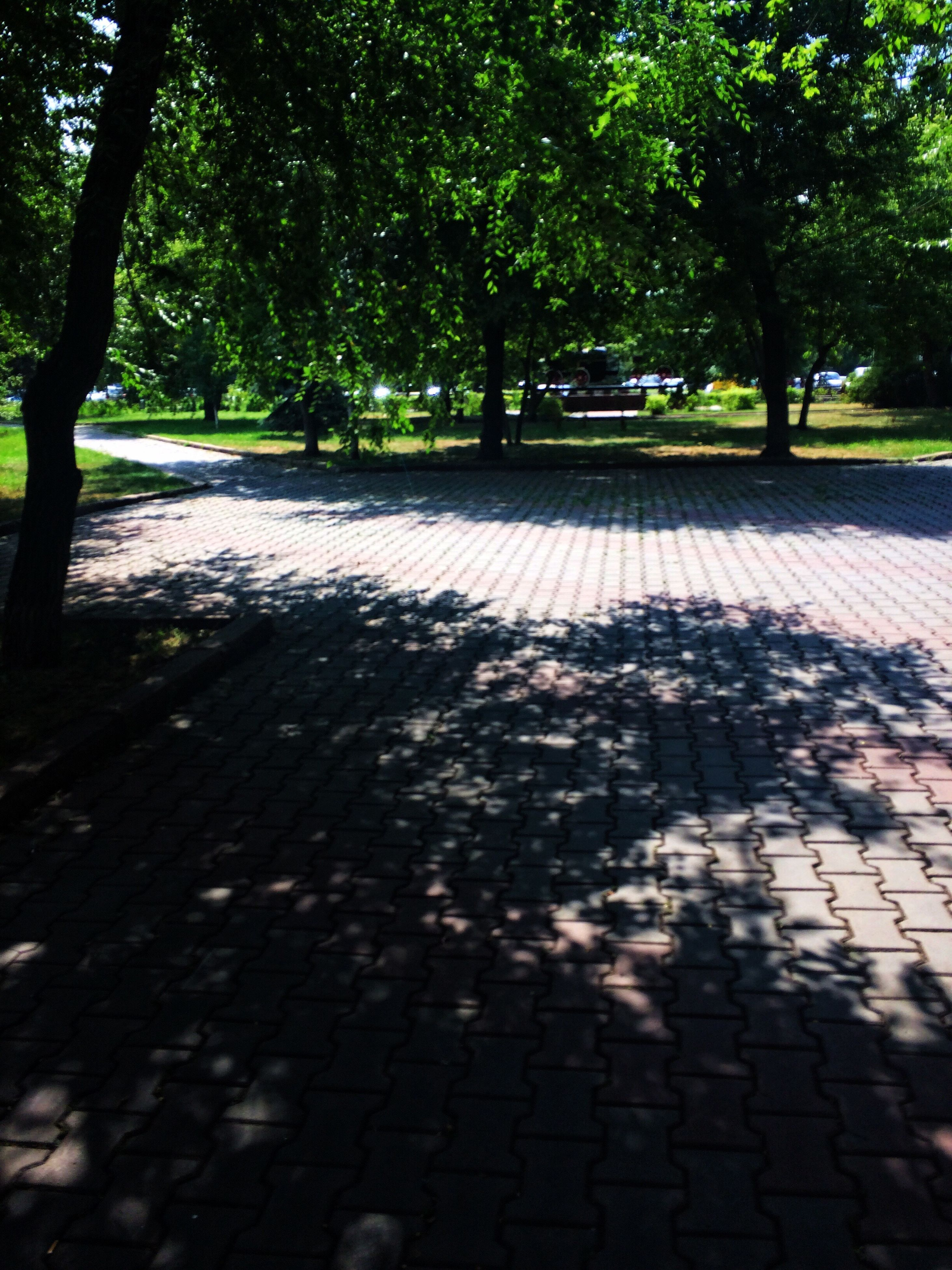 tree, shadow, outdoors, nature, sunlight, day, no people, growth, road