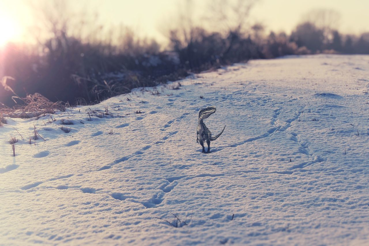 """I think I'm going in circles..."" Winter Snow Cold Temperature Outdoors Nature Day One Animal Tadaa Community Tadaa Nature Nature_collection How The Dinosaurs Really Died Sunset Sunset_collection Melancholic Landscapes Winter Wonderland Walking Around Lonely Frozen Shootermag White Album Atmospheric Mood P510 Wintertime Animals In The Wild"