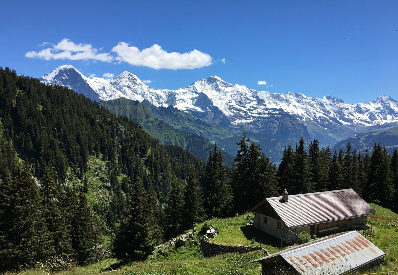Left to right: Eiger Mönch Jungfrau and you can just glimpse Silberhorn to the right of jungfrau Mountains Swiss Alps Mountain Range Snow View From The Train Chalet Forest Tree Green