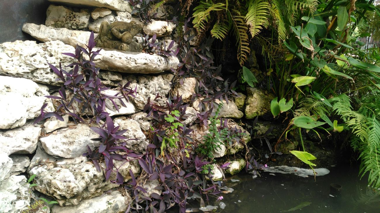 Plants Frog Water Purple Plant Check This Out Taking Photos Hanging Out Beautiful Nature Texas Made