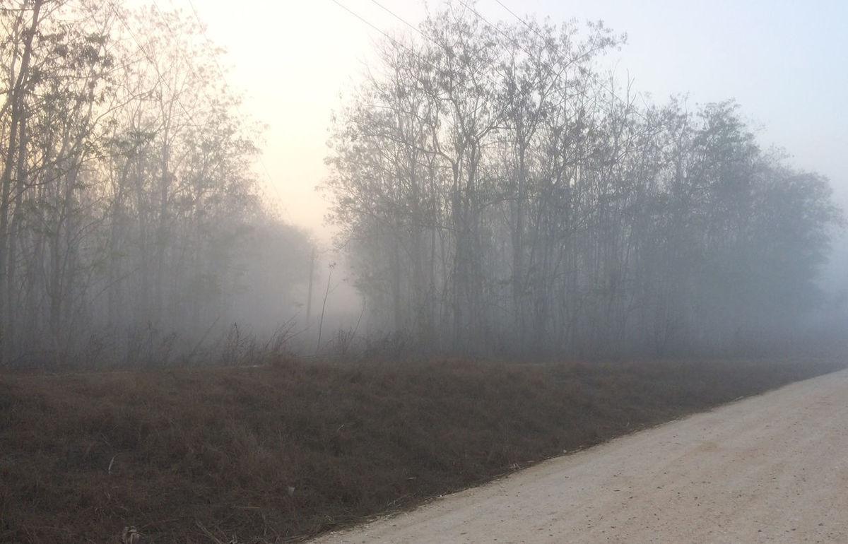 Niebla en el sendero Bare Tree Beauty In Nature Day Fog Hazy  Landscape Mist Nature No People Outdoors Scenics Sky Tranquil Scene Tranquility Tree