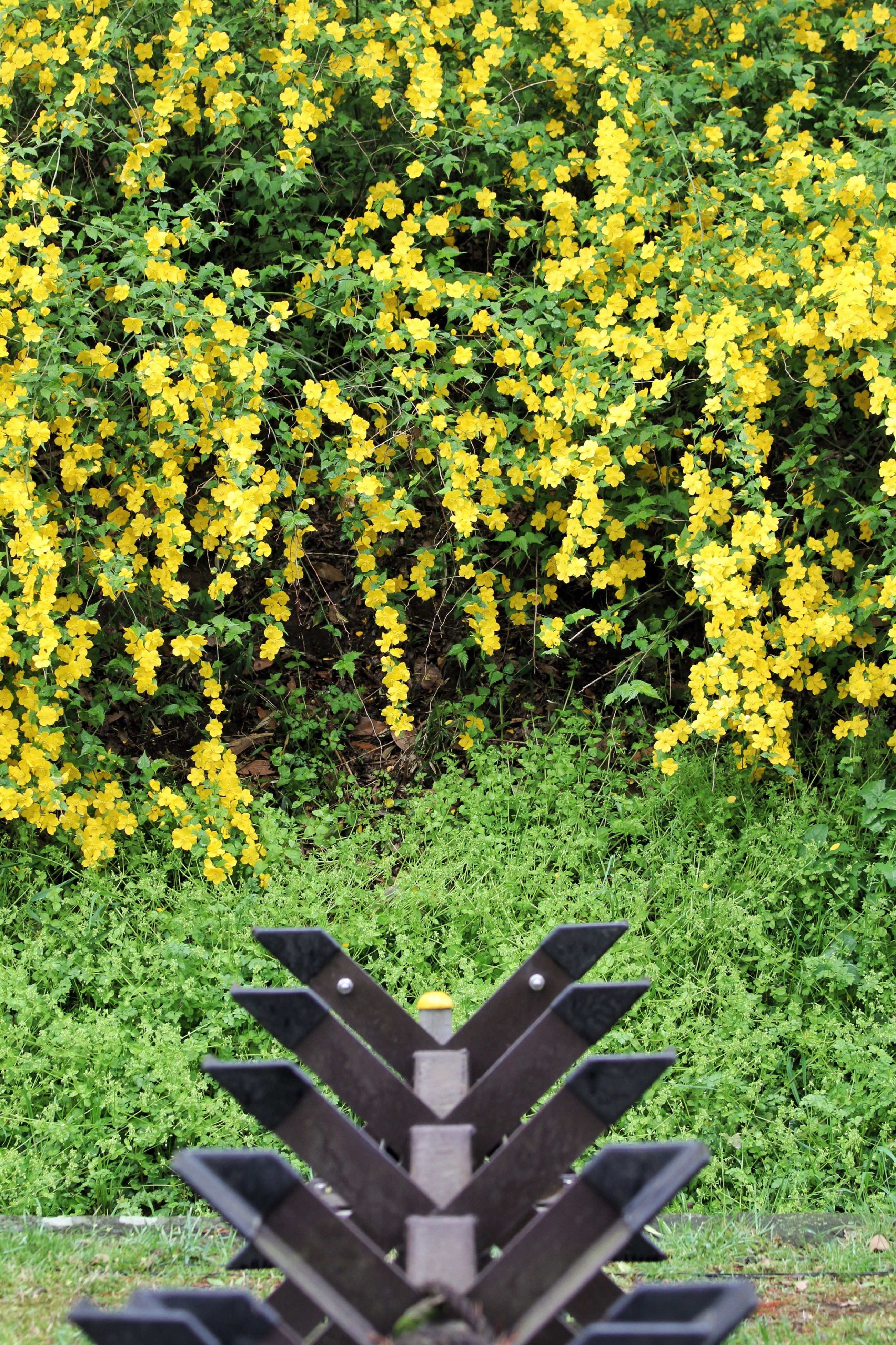 yellow, growth, flower, beauty in nature, nature, plant, green color, freshness, field, park - man made space, tree, tranquility, grass, leaf, high angle view, lush foliage, abundance, outdoors, day, fragility