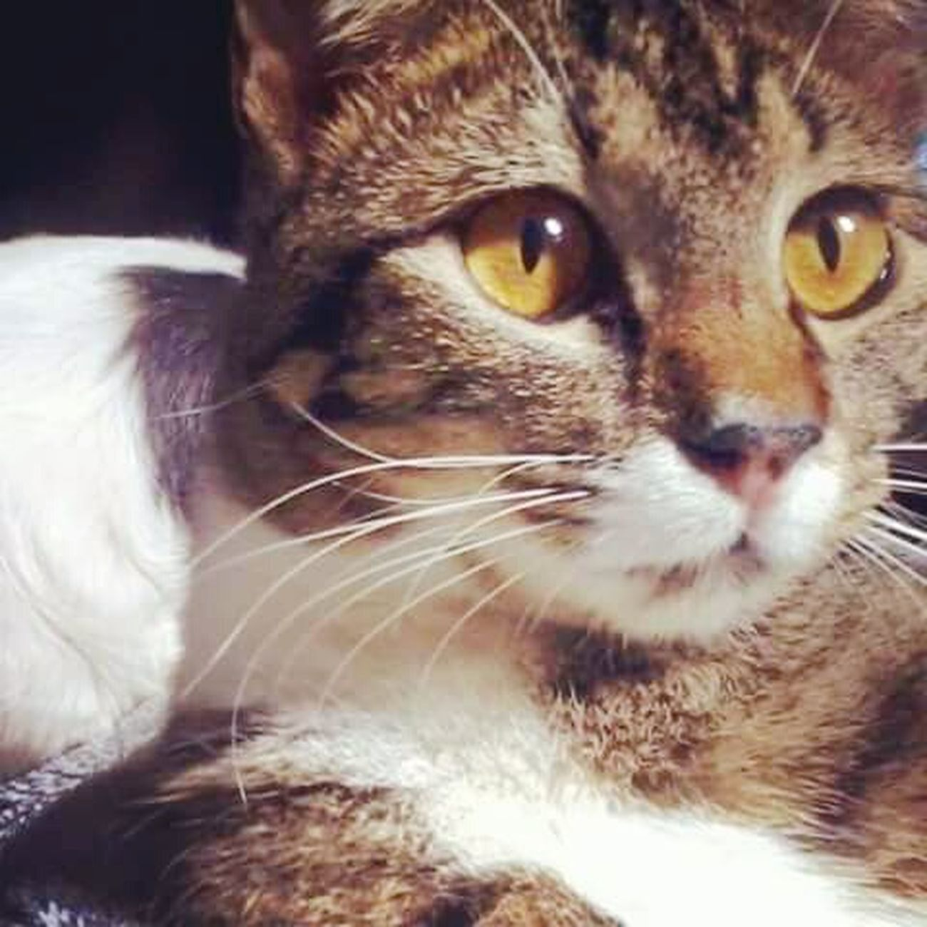 Whisky ♥ Gato Felino Amorsemlimites Meuciumentofavorito MeuGato Obrigadosenhor