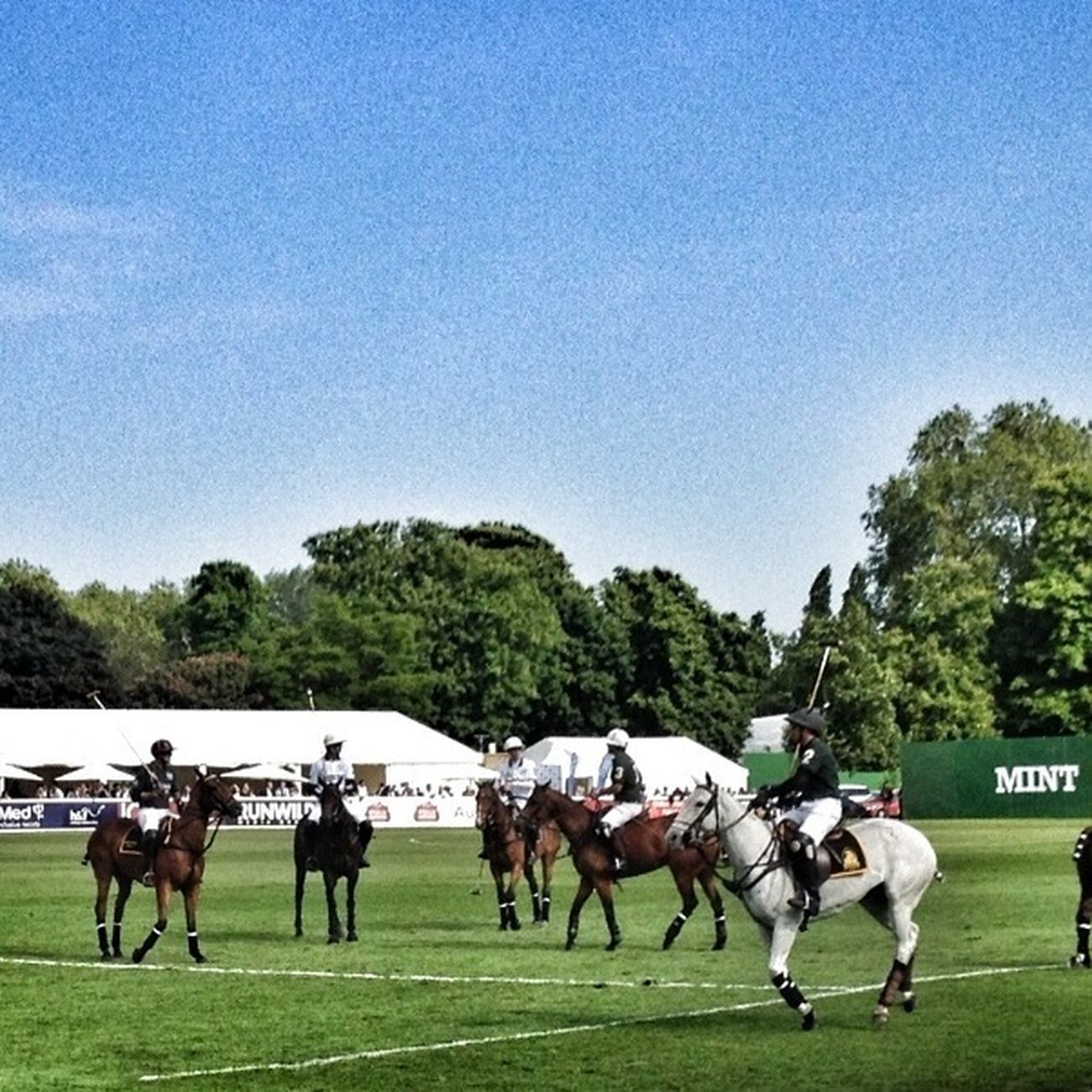 Mint Polo Match