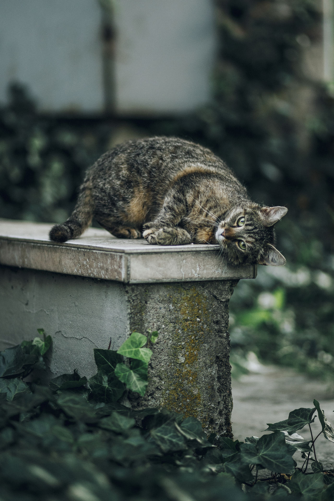Lazy Sunday in Mielec, Poland. Animal Themes Close-up Day Domestic Animals Domestic Cat Mammal Nature No People One Animal Outdoors Pets Relaxation