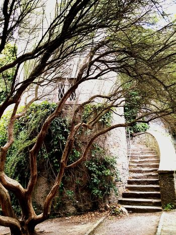 Old Castle Ghost House The Tree Of Life Malahide Castle Ireland🍀 Memories Miss This  Want To Come Back