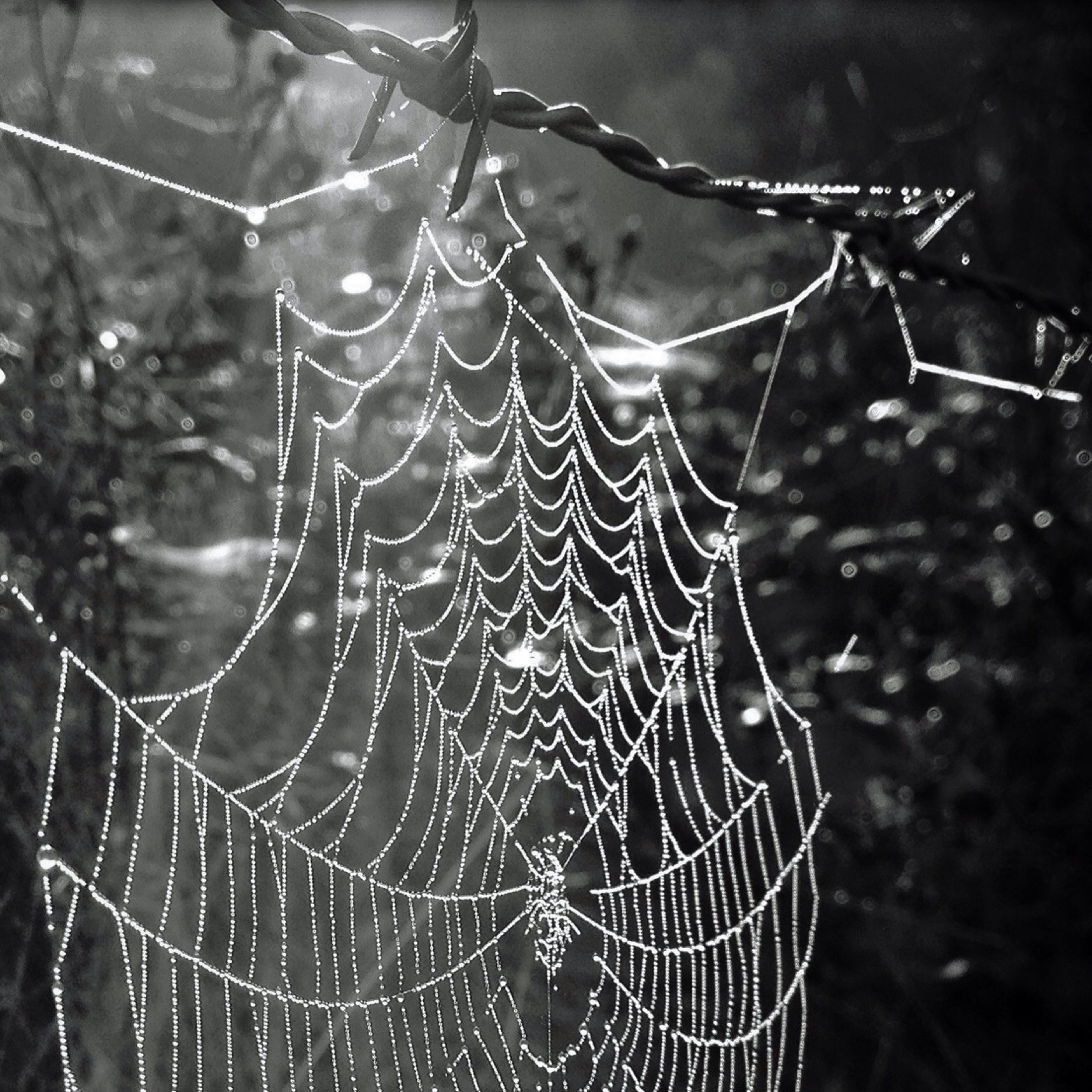 spider web, focus on foreground, close-up, drop, natural pattern, fragility, nature, wet, pattern, dew, water, beauty in nature, plant, growth, day, outdoors, complexity, selective focus, no people, tranquility