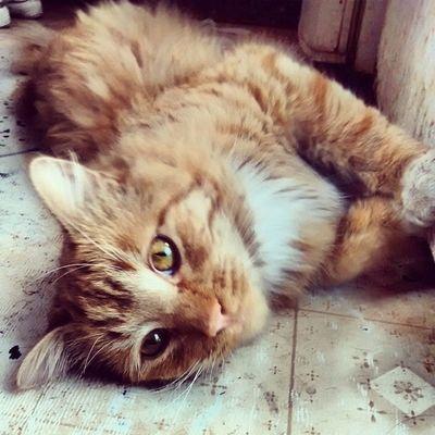 Chispo!!! Catlover GatoHermoso