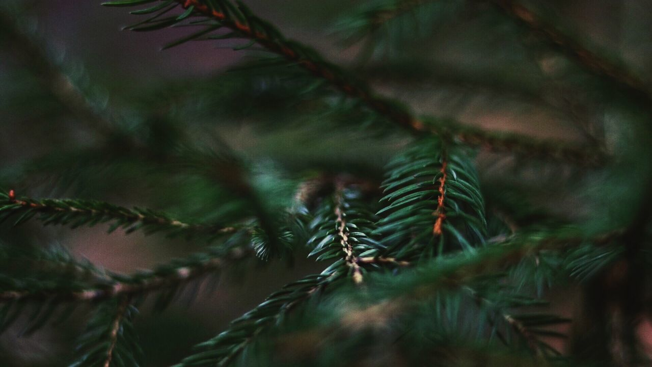 green color, nature, growth, close-up, no people, selective focus, pine tree, tree, christmas tree, day, needle - plant part, christmas, plant, beauty in nature, outdoors, spruce tree, fir tree, branch