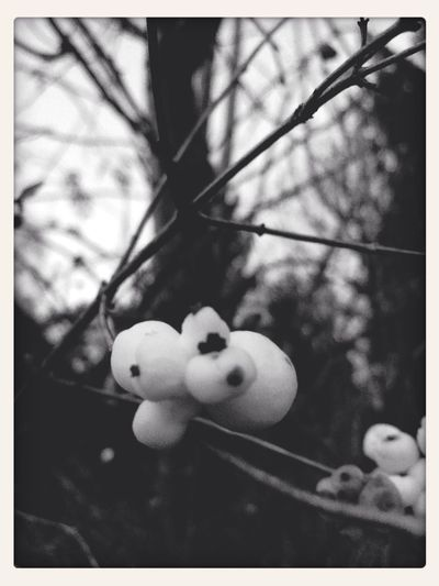 popplers. Nature_collection