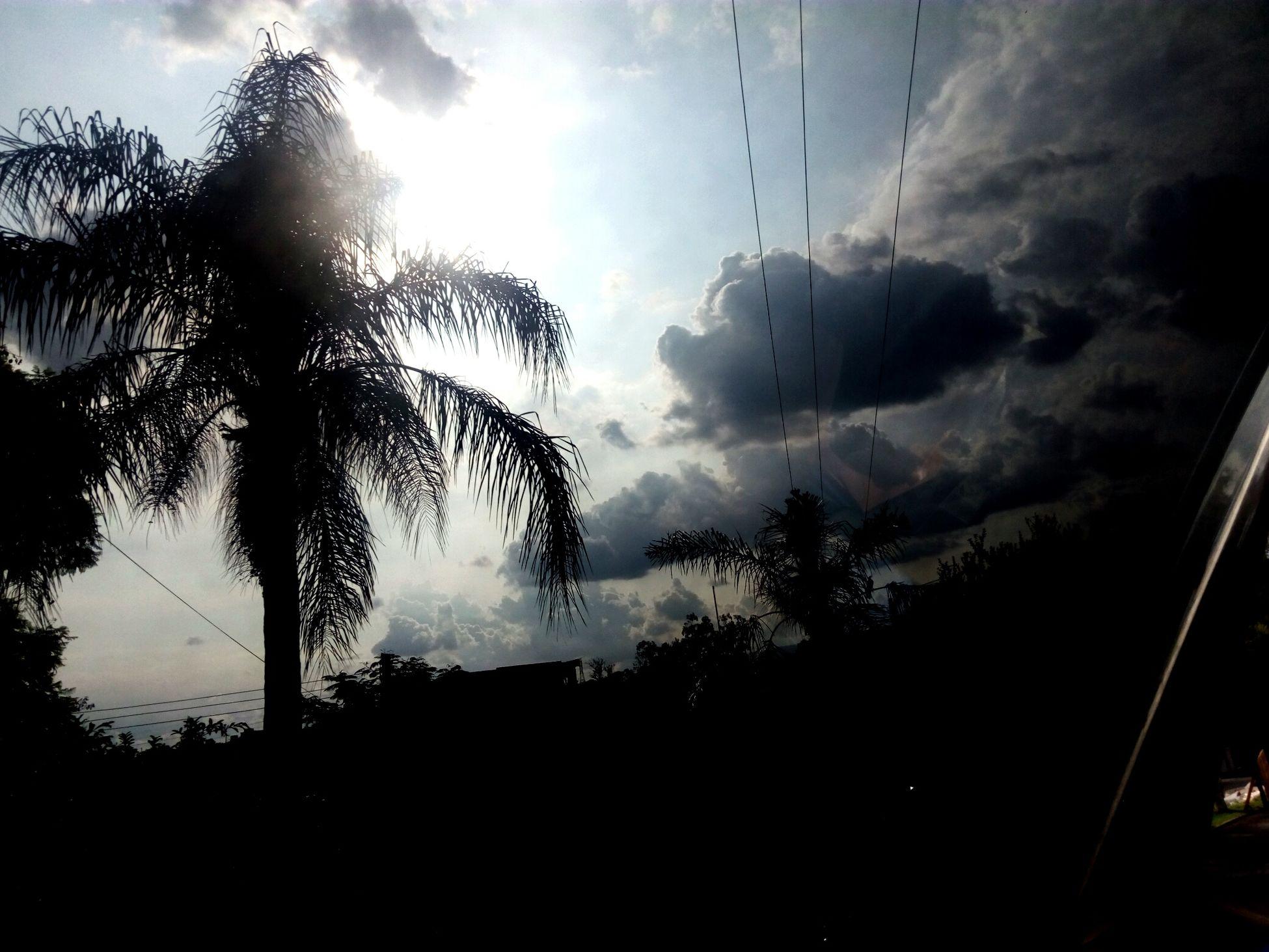 Sky And Palm Tree🌴