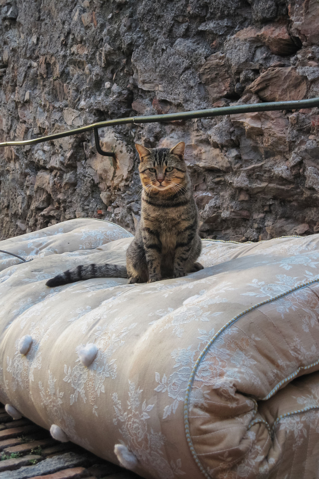 A cat on a mattress ( The king of the Crêuza) Animal Themes Cat Close-up Day Domestic Animals Domestic Cat Feline Looking At Camera Mammal Matress No People One Animal Outdoors Pets Portrait The Week On EyeEm