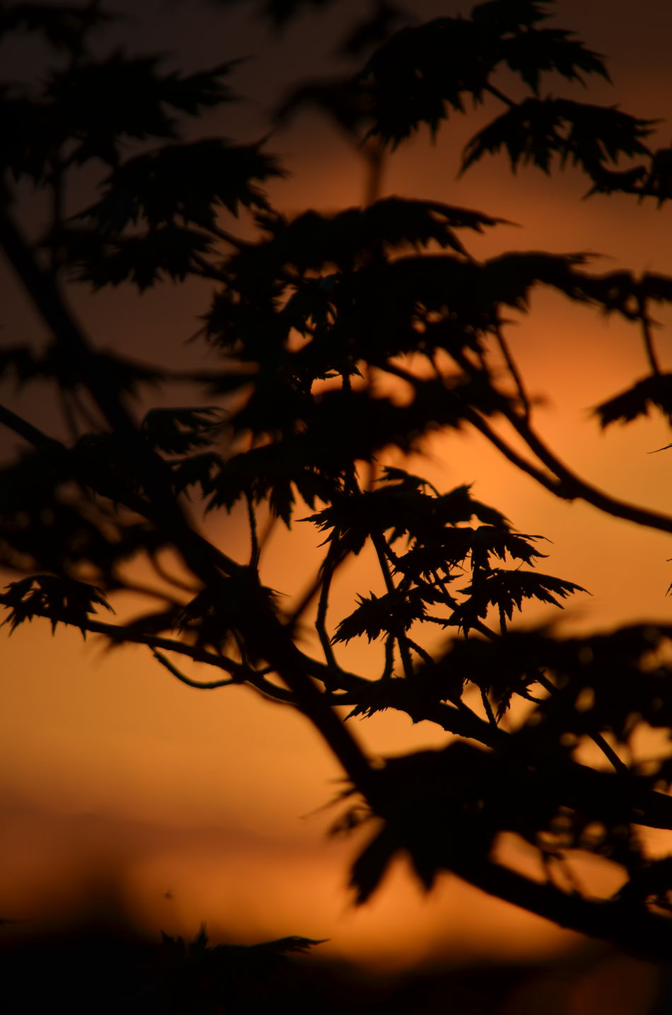 Beauty In Nature Branch Close-up Growth Nature Night No People Outdoors Plant Scenics Silhouette Sky Sunset Tranquility Tree