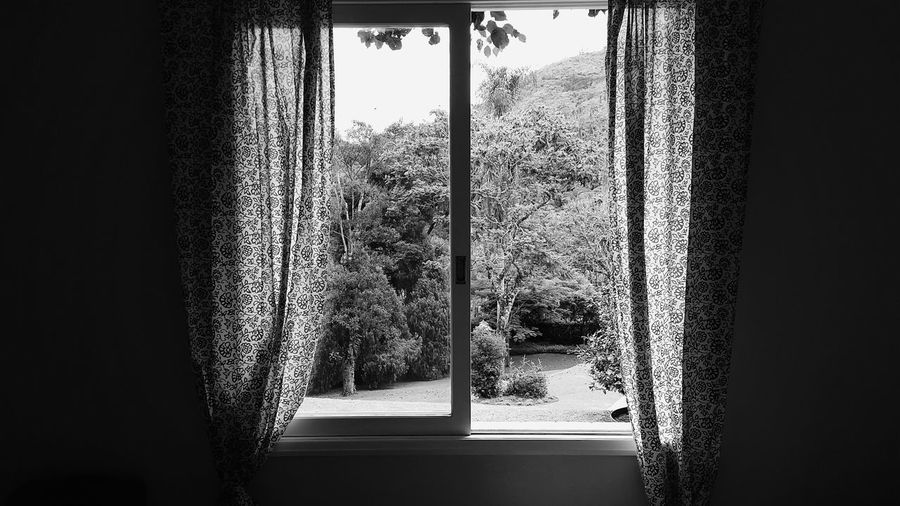 Window Indoors  Tree Day Growth Curtain Nature Home Interior No People Water Architecture Greenhouse Close-up Window Frame