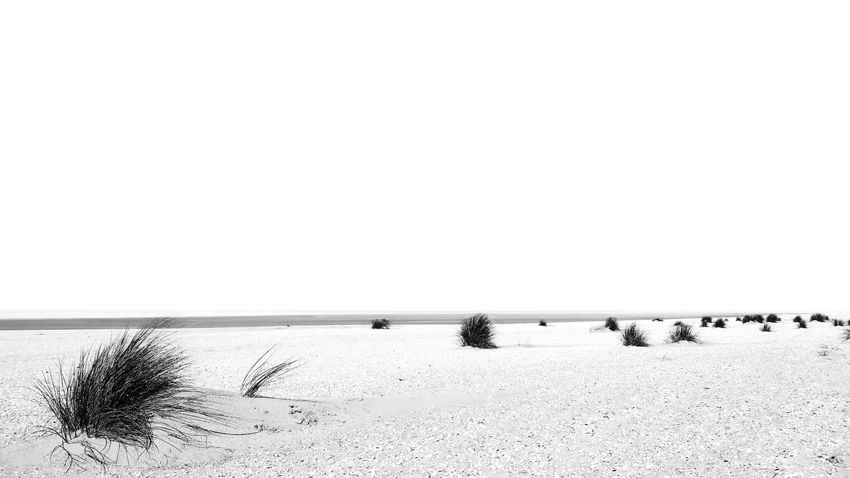 B&w B&w Photography Beach Beauty In Nature Black & White Black And White Blackandwhite Clear Sky Eye4photography  EyeEm Gallery EyeEm Nature Lover Growth Horizon Over Water Nature No People Plant Sand Scenics Sea Tranquil Scene Tranquility Water Black And White Friday