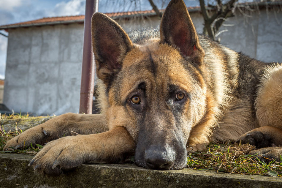 Beautiful stock photos of traurig, Animal Themes, Close-Up, Day, Dog