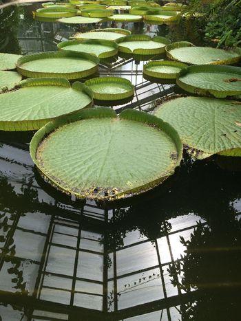 See Leafs Pont Lake
