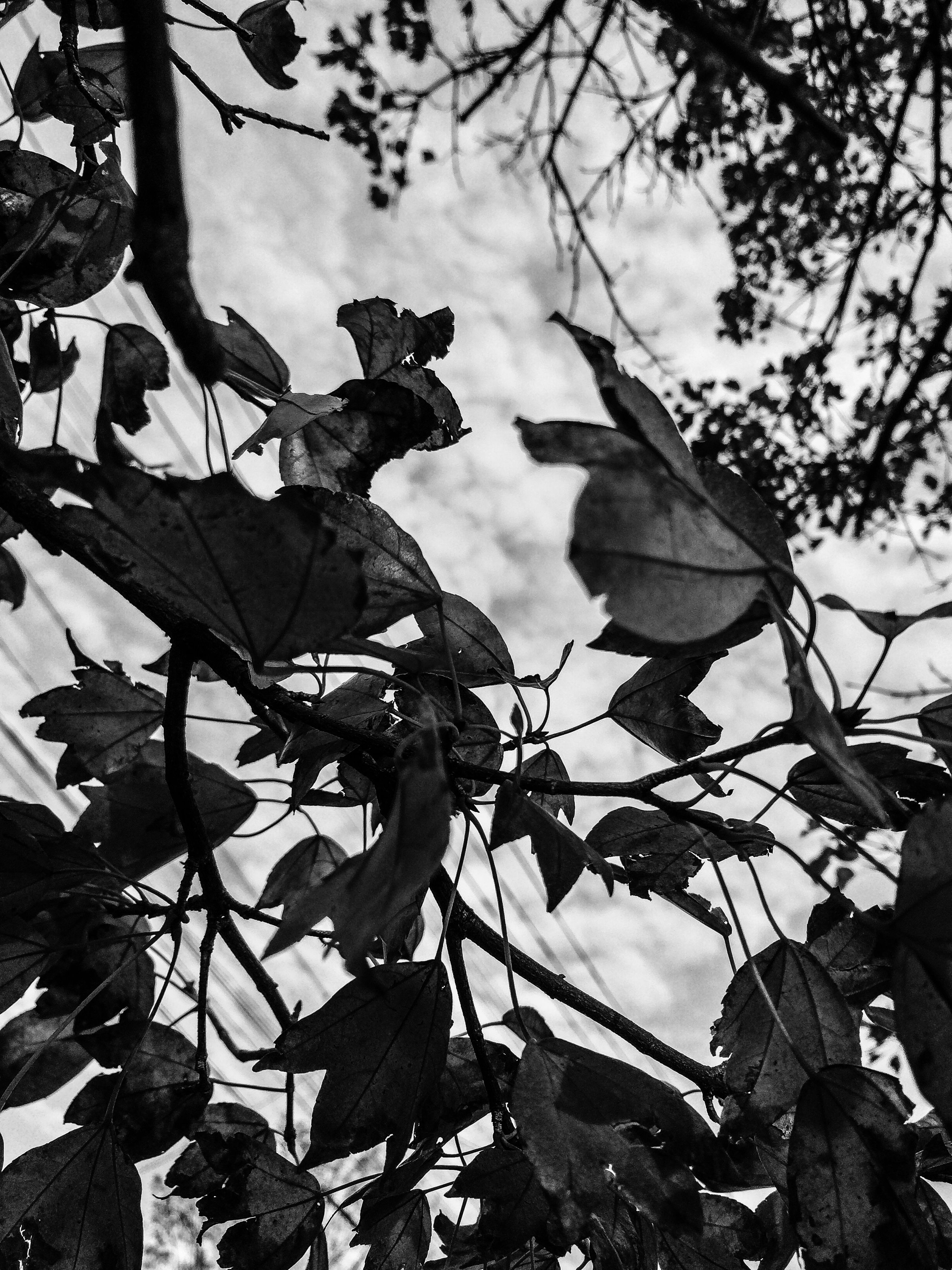 leaf, sky, low angle view, branch, tree, cloud - sky, nature, growth, outdoors, day, cloudy, no people, cloud, close-up, plant, leaves, built structure, dry, sunlight, tranquility
