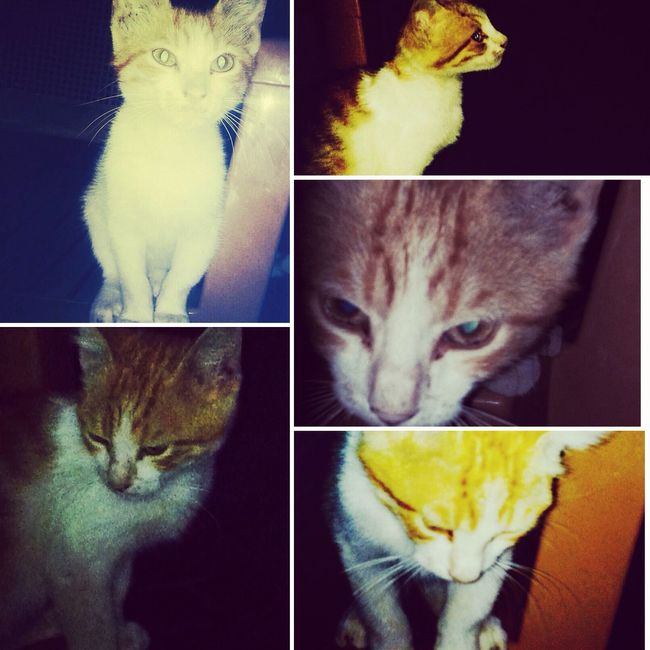My Little Cat☺ Meow =^_^= Taking Photos
