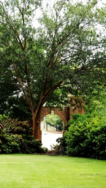 """""""Exit into the World"""" Garden Gate Exit And Entrance Exit Gate Green Green Green!  Bushes And Trees Yard Gate To The World Archway Entranceway Entrance Gate Entrance Portal Entrance Way Entrance To Wonderland Landscape_captures Grass And Trees"""