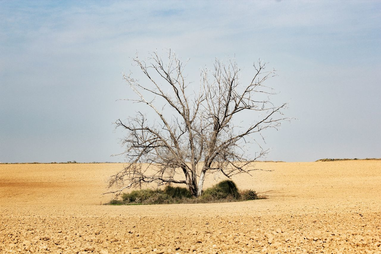 Lonely Tree In Desert