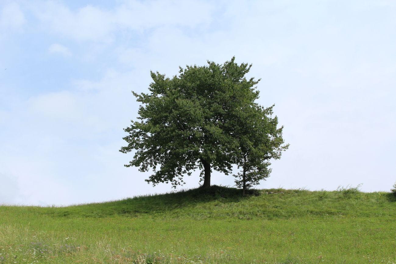 Nature Trees Enjoying The Sun Summer