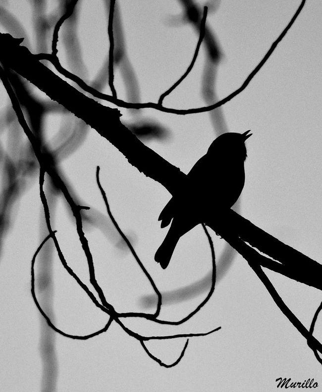 Bird Photography Aves Bird Animals In The Wild Nature Animal Wildlife Nikonphotography NikonD60 Nikonespaña Aves 🐥🐤🐥 Petirrojo Petirrojoeuropeo Robin