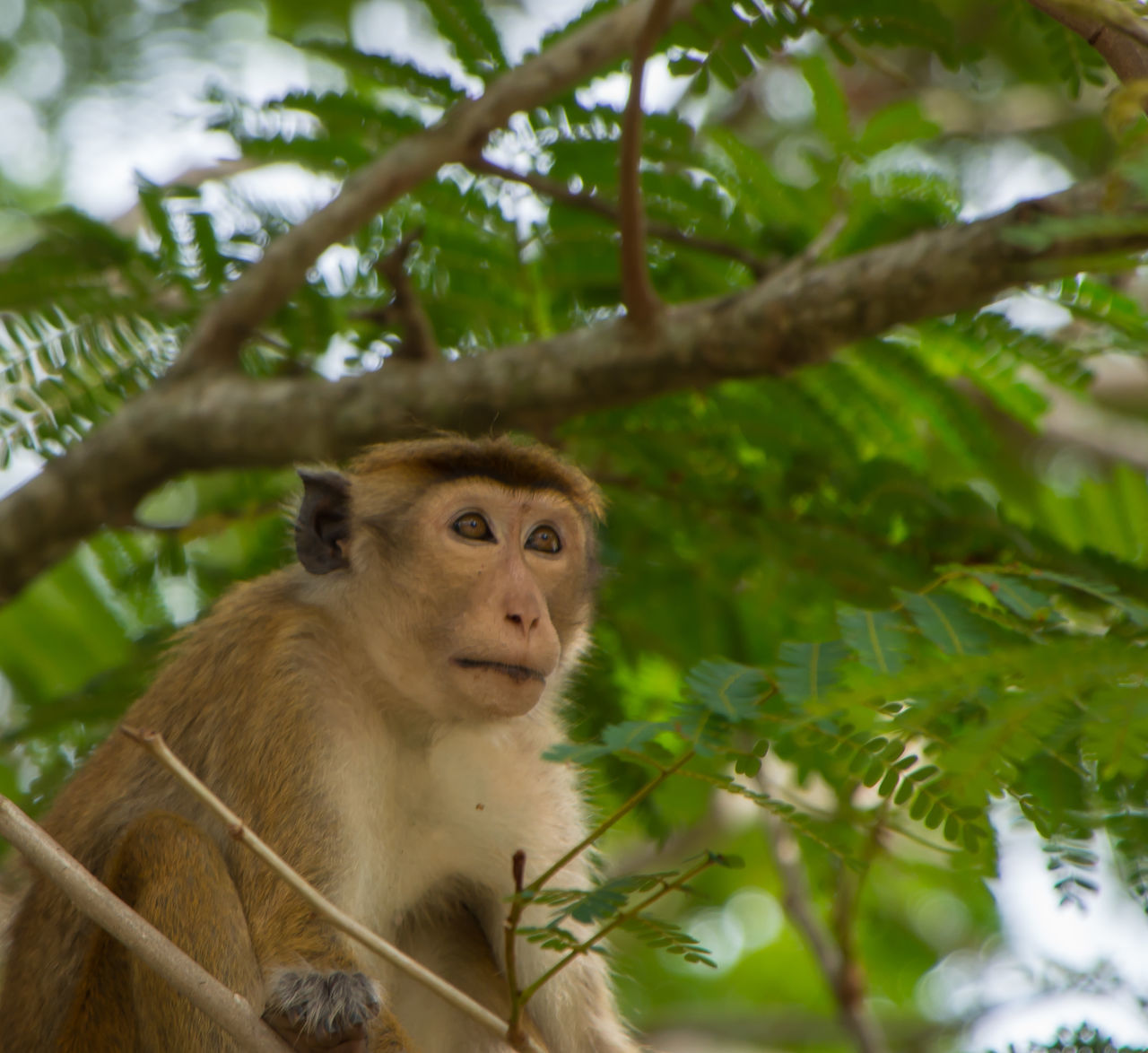 animals in the wild, mammal, wildlife, one animal, animal themes, tree, monkey, no people, day, outdoors, nature