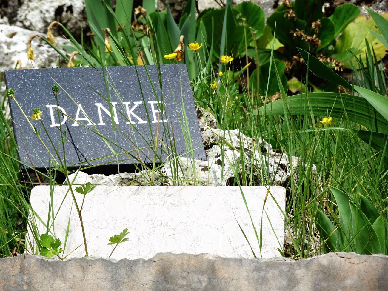 Danke  Thankyou Saying Thanks! Outdoors Text Grass Nature Close-up Schio Italy Flowers Spring Grateful Being Grateful Schild Sign German Tedesco
