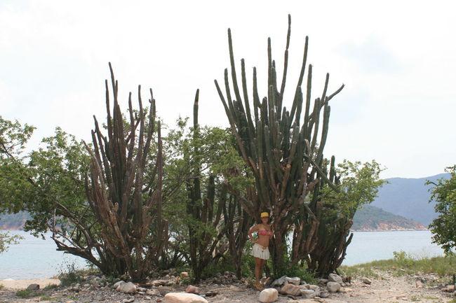 Big Cactus Bikini Cactus Growing Growth Nature Outdoors Plant Thorn Travelling Tree Vacation Venezuela Girl Young Women